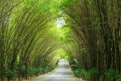 路通过竹子隧道  免版税库存照片