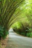 路通过竹子隧道  库存照片