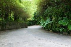 路通过竹子隧道  免版税库存图片