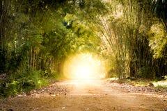路通过竹森林和光结束隧道的末端 库存图片