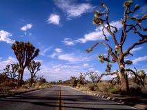 路通过约书亚树国家公园 库存图片