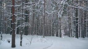 路通过随风飘飞的雪在冬天森林里 股票视频