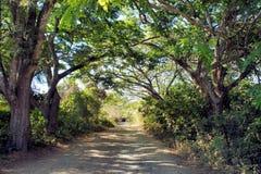 路通过雨林 库存图片