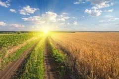 路通过领域用麦子 免版税库存照片