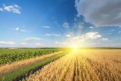 路通过领域用麦子 免版税库存图片