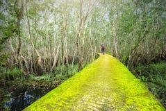 路通过melaleuca森林青苔 库存照片