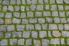 路铺与石头和发芽的绿色青苔 库存照片