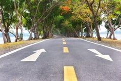 路面上的白色箭头标志标号在公园 免版税库存图片