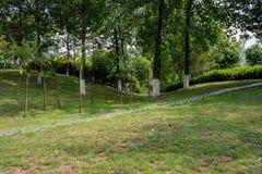 路面在山坡的被遮蔽的象草的草坪在晴朗的夏天 免版税库存图片