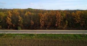 路鸟瞰图在日落的秋天森林里 与农村路,与红色和橙色叶子的树的令人惊讶的风景在a 股票视频