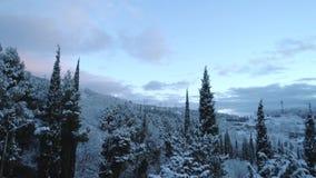 路鸟瞰图通过雪杉木森林在冬天 ?? 鸟瞰图深刻的冬天农村国家风景飞行 股票视频