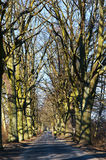 路,树,路,胡同,没有叶子,自行车游览 免版税图库摄影