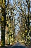路,树,路,胡同,没有叶子,自行车游览 免版税库存图片