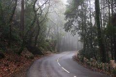 路,轮,雾,森林,葡萄牙 免版税库存照片
