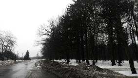 路,雪,森林 免版税图库摄影