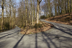 路-蛇纹石到森林里 免版税库存图片