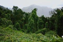 路TF-12在Anaga农村公园-与古老森林的峰顶Te的 免版税库存照片