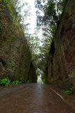 路TF-134在Anaga农村公园-罕见的古老月桂树森林und 免版税图库摄影