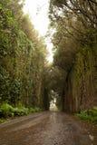 路TF-134在Anaga农村公园-罕见的古老月桂树森林und 免版税库存图片