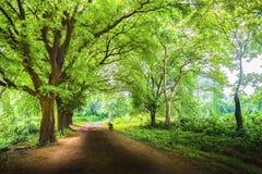 路throgh森林 库存图片