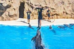 跳出在更加温驯的海豚展示的海豚水在Lo 库存图片