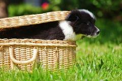 跳出案件的逗人喜爱的小狗 库存图片