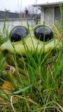跳动的小的青蛙 免版税库存照片