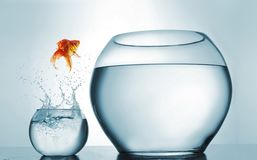 跳在一个更大的碗的金鱼-志向和成就概念 免版税库存照片