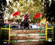 跳在冠军的马 免版税库存图片