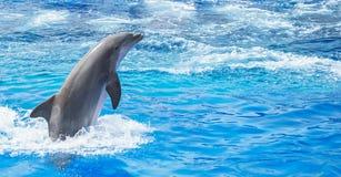 跳在清楚的蓝色海的海豚 免版税库存图片