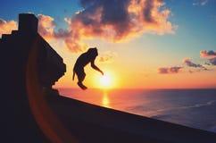 跳在美好的日落期间的猴子 库存照片