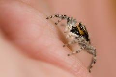 跳的蜘蛛在手边 图库摄影