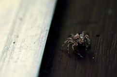 跳的蜘蛛 免版税图库摄影