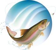 跳的鳟鱼 免版税库存照片