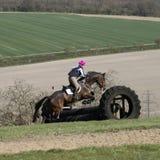 跳篱芭的马在英国乡下 免版税库存图片