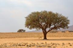 跳羚在树下 免版税库存照片