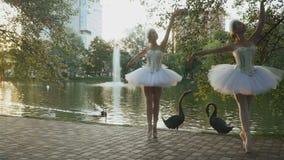 跳舞在与天鹅的背景的优美的芭蕾舞女演员在公园 影视素材