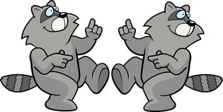 跳舞浣熊 库存图片
