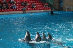 跳舞海豚 免版税图库摄影