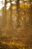 跳舞神仙& x28; midges& x29;在五颜六色的森林里 免版税库存照片