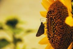 跳舞蝴蝶的花 库存照片