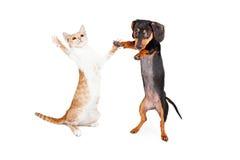 跳舞Doxie狗和小猫 免版税库存图片