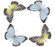 跳舞no.5的蝴蝶 免版税库存图片