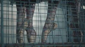 跳芭蕾舞者的亭亭玉立的优美的腿在黑暗的与光和烟在背景 关闭年轻的腿 股票视频