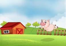 跳跃在农场的猪 库存图片