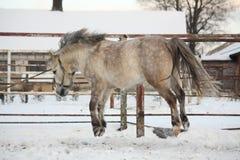 跳跃在天空中的逗人喜爱的小马 免版税库存图片