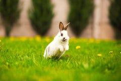 跳跃在绿草复活节兔子的兔子 库存照片