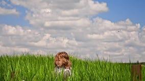 跳跃在绿色草甸的逗人喜爱的男孩 股票视频