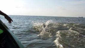 跳跃的和游泳的海豚在黑海 股票视频