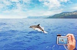 跳跃的海豚 免版税图库摄影